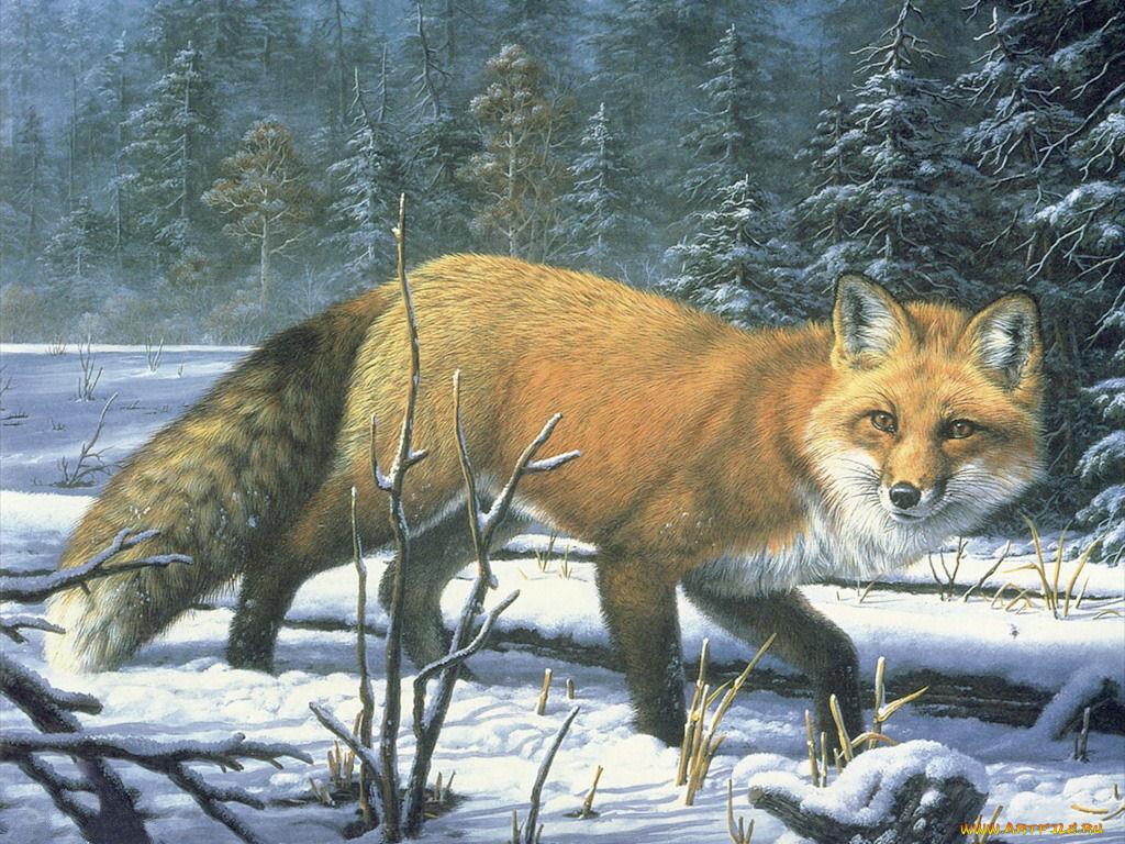 Картинки дикие животные нарисованные